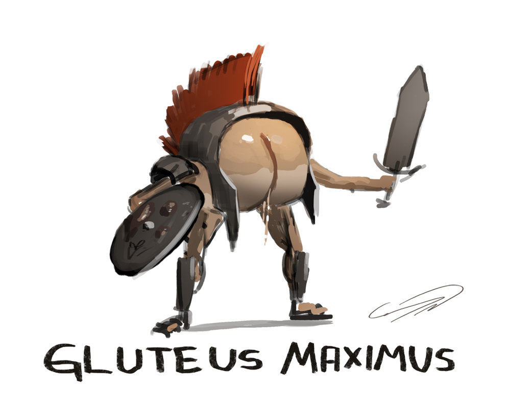 gluteus_maximus_by_connynordlund-d620l07